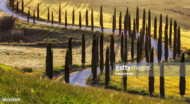 cypresses road - siena italië stockfoto's en -beelden