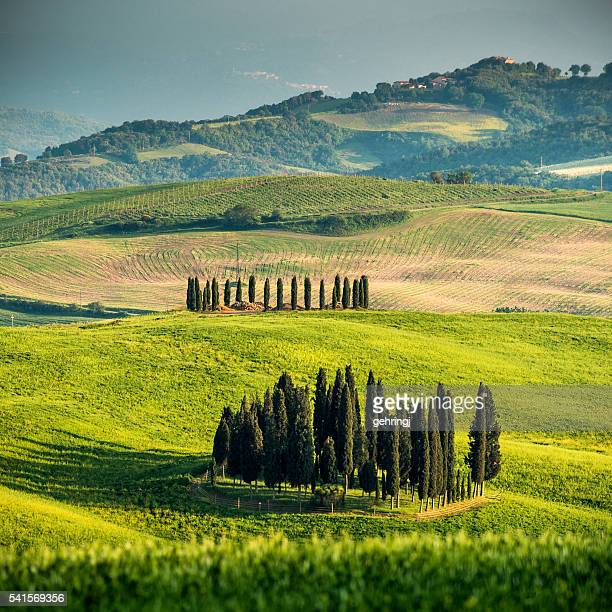 cypresses uder stormy sky - val d'orcia stock pictures, royalty-free photos & images