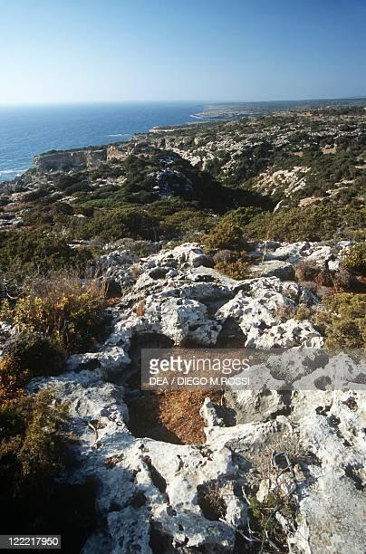 Cyprus, Akamas Peninsula, vegetation along coast.