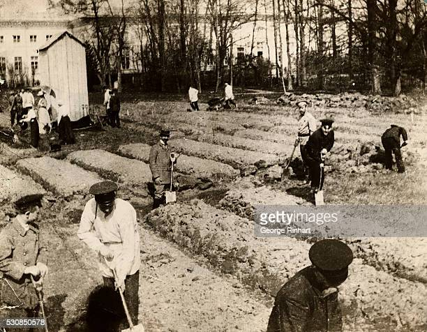 Czar Nicholas II of Russia and his family working in a vegetable garden in Siberia before their execution