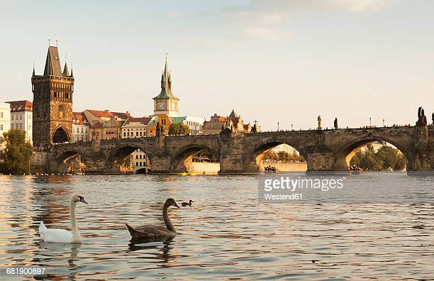czechia, prague, view to the historic city with old town bridge tower and charles bridge - charles bridge stock photos and pictures