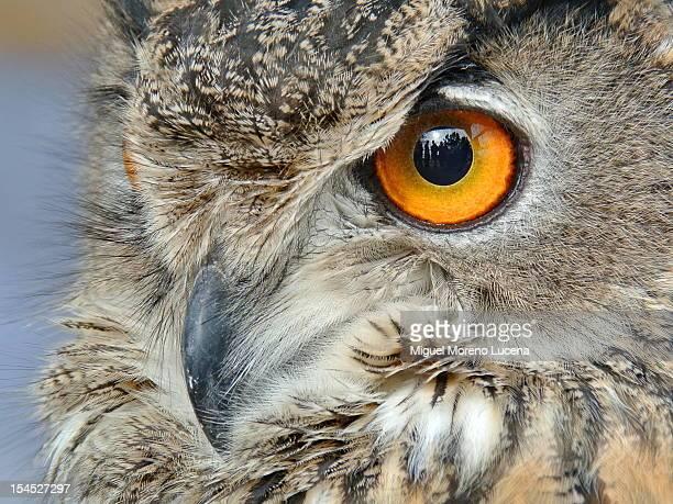 Día de las Aves 2012 (08)