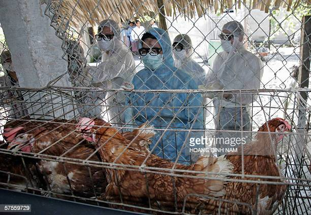 Vietnamese Agriculture Minister Cao Duc Phat and delegates to an APEC bird flu meeting tour a private chicken farm in the Vietnamese central city of...