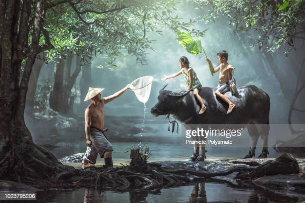 dad and son this is lifestyle of family farmer at rural asia. traditional life of famer in countryside thailand. the joy of children with buffalo in the river at the forest. - forens stock pictures, royalty-free photos & images