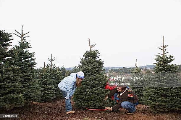 dad cutting christmas tree - cutting stock pictures, royalty-free photos & images
