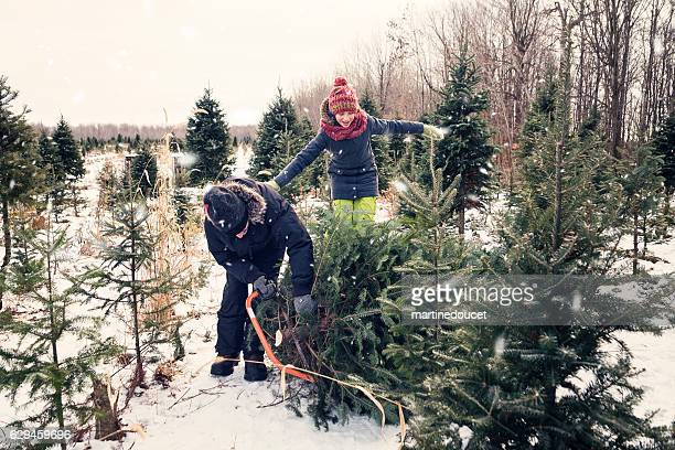 Dad cutting perfect Christmas tree with helping daughter outdoors winter.