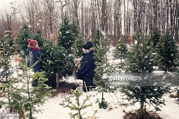 """dad cutting perfect christmas tree with helping daughter outdoors winter. - """"martine doucet"""" or martinedoucet fotografías e imágenes de stock"""