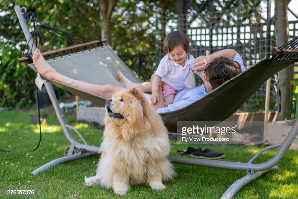 dad lying in backyard hammock with his young son and dog - chow dog stock pictures, royalty-free photos & images