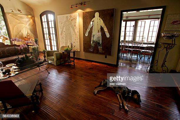 Daddy, a one year old Catahoula Louisiana Leopard dog, relaxes inside living room of his master, Laurie Frank's home on Whitley Terrace in Los...