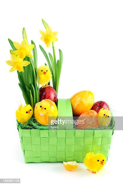 daffodil with easter eggs and young chicken in green basket