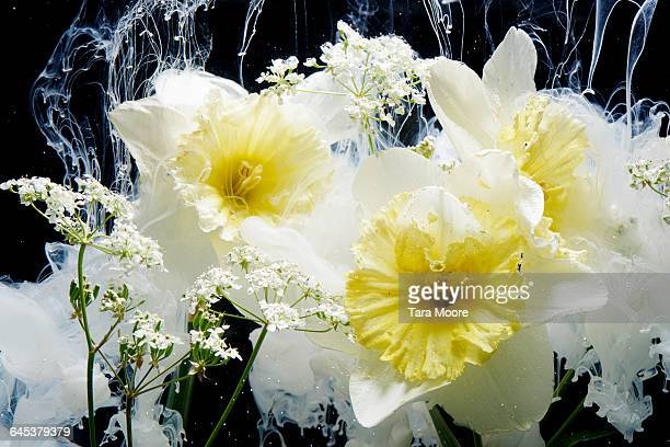 daffodils and paint in water