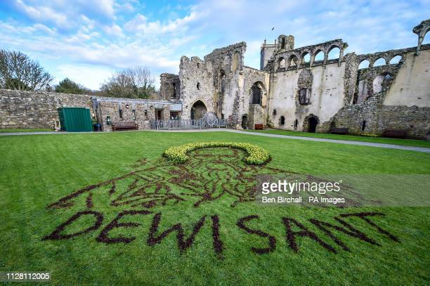 Daffodils and tree bark create a portrait of St David Wales' patron saint made by Welsh artist and BGT finalist Nathan Wyburn in the courtyard of St...