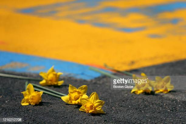 Daffodils are placed at the Boston Marathon finish line in Boston on April 15 2020 One Boston Day is the seventh anniversary of the Boston Marathon...