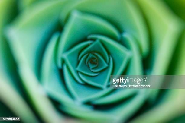 daffodils flower. - geometriestunde stock-fotos und bilder