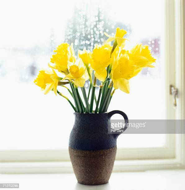 daffodils in a window. - daffodils stock photos and pictures