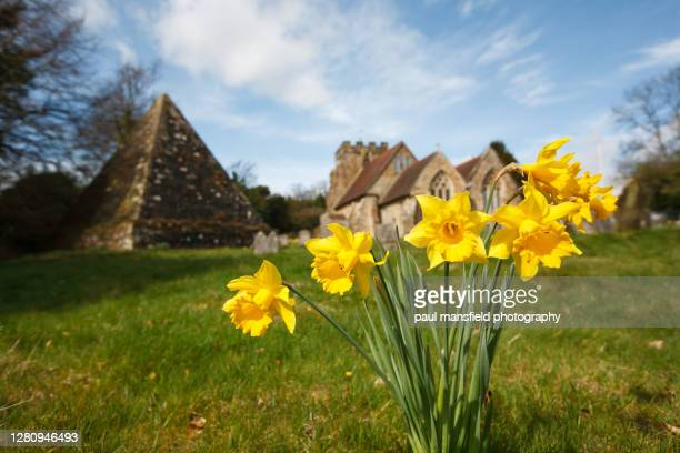 daffodils in churchyard - death stock pictures, royalty-free photos & images