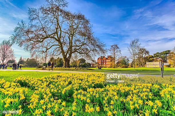 Daffodils in spring at Royal Botanic Gardens Kew.