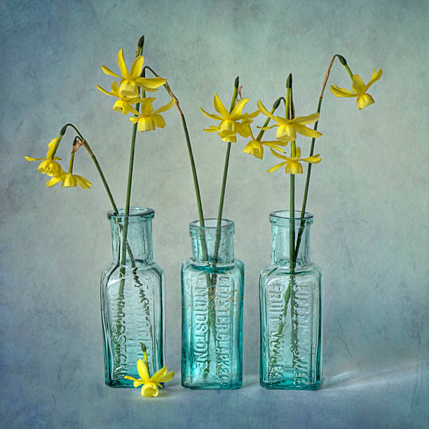 Daffodils in three glass bottles