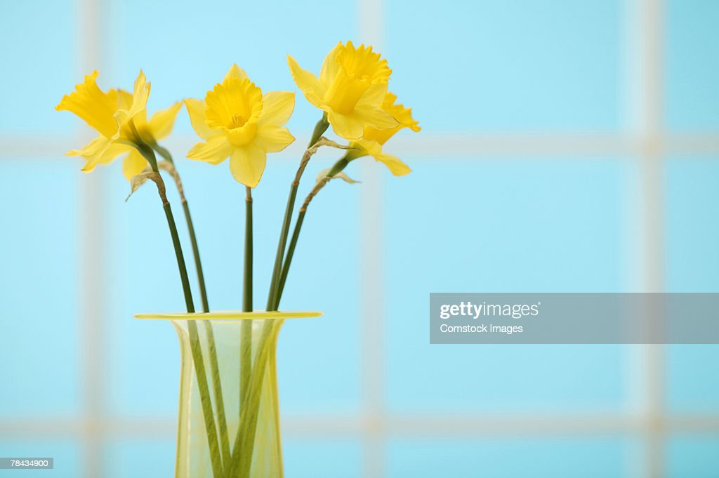 Daffodils in vase : Stockfoto