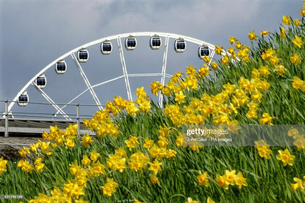 Daffodils on the City Walls of York on Easter Sunday as the York Eye rises in the background.