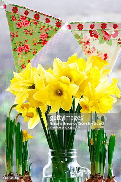 daffodils - gregoria gregoriou crowe fine art and creative photography. stock-fotos und bilder