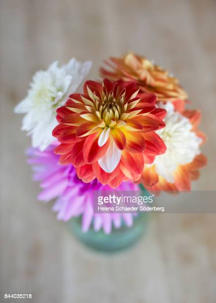 Dahlia arrangement in glass vase