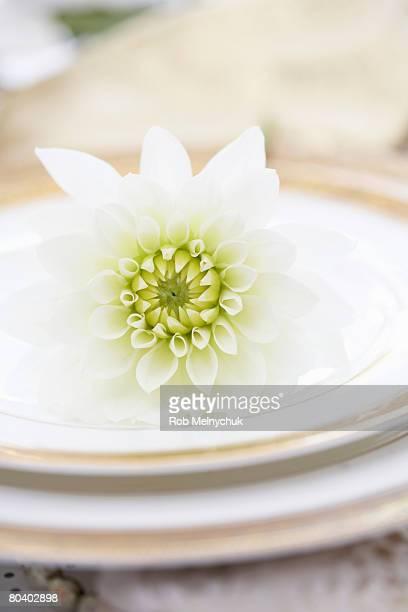 Dahlia on plates