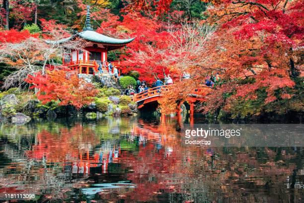daigoji temple and red maple trees in autumn, kyoto, japan - shingon buddhismus stock-fotos und bilder