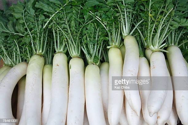 daikon (japanese radishes), close-up - dikon radish stock photos and pictures