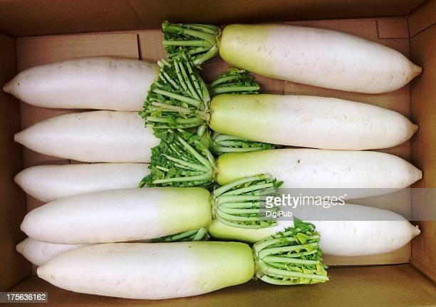 daikon radish in card box - dikon radish stock photos and pictures
