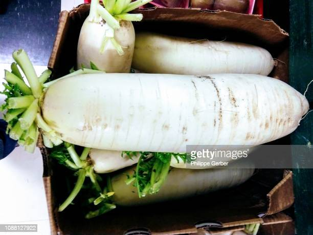 daikon radishes - dikon radish stock photos and pictures