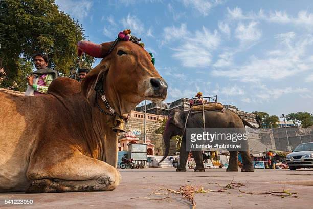 Daily life along Ram Ghat