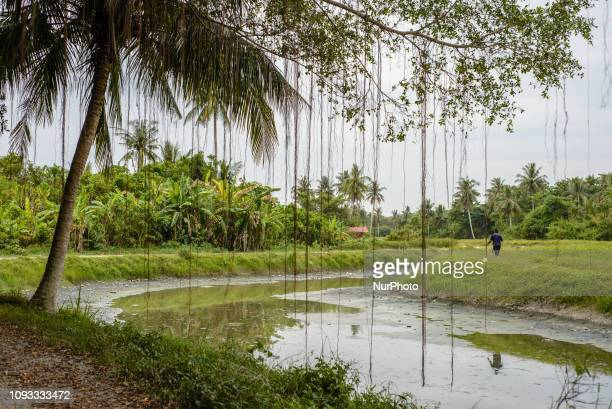 Daily life in Balik Pulau area Southwest Penang Island District Penang Island Malaysia in January 2019