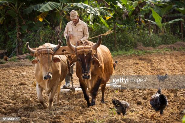 daily life in cuba - pinar del rio stock photos and pictures