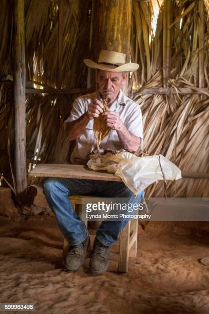 daily life in cuba - vinales - pinar del rio stock photos and pictures