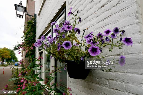 daily life in haarlem, nl - basslabbers, bastiaan slabbers stock pictures, royalty-free photos & images