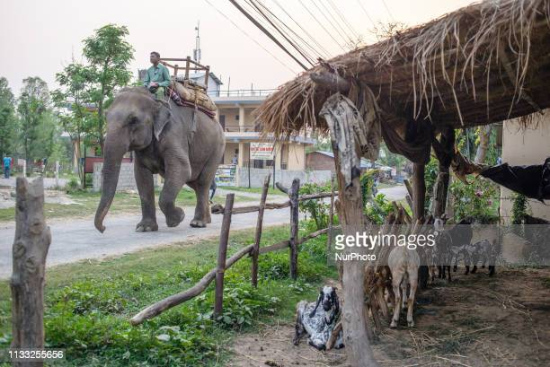 Daily Life in Sauraha, Chitwan National Park, Nepal, on March 25, 2019.