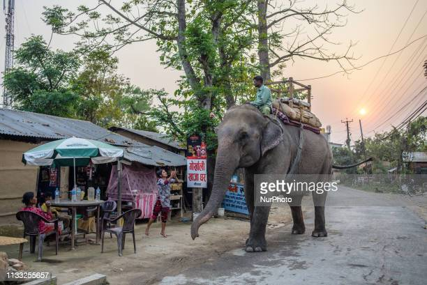 Daily Life in Sauraha Chitwan National Park Nepal on March 25 2019