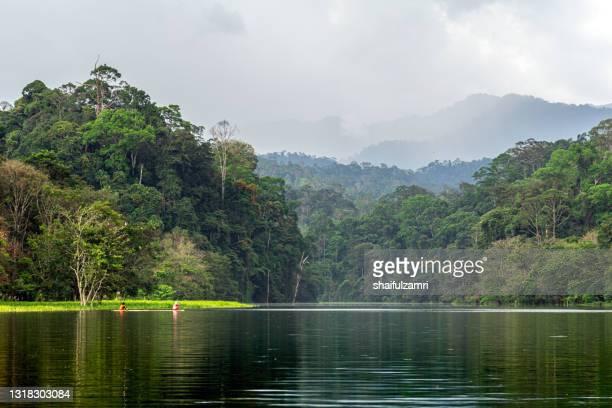 daily life of local people in royal belum rainforest park, perak, malaysia. - shaifulzamri 個照片及圖片檔