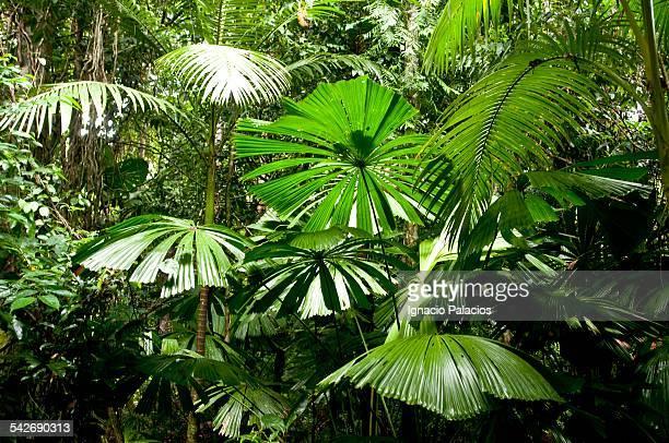 Daintree forest tropical vegetation