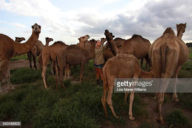 Dairy assistant Sherrie Garcia greets the camel herd at QCamel dairy on April 4 2016 on the Sunshine Coast Australia QCamel founded by Lauren...