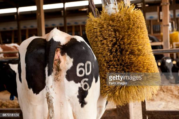 30 Top Cattle Sheds Pictures, Photos and Images - Getty Images