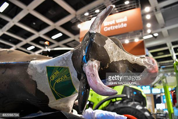 A dairy cow figure bearing a Green Week logo awaits deployment at the International Green Week food and agriculture fair in Berlin on Januay 19 2017...