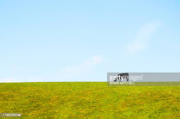 dairy cow standing alone in a meadow, silhouetted agint the sky-line - image stock pictures, royalty-free photos & images