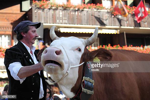 dairy cow winner of livestock competition - cow mooing stock pictures, royalty-free photos & images