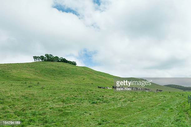 dairy cows and pasture land - ippei naoi stock photos and pictures