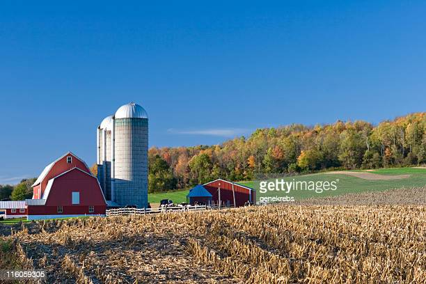 Dairy farm and field with red barn in autumn