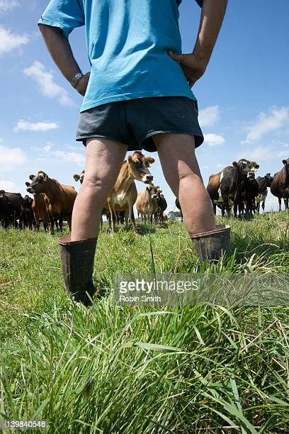 A dairy farmer in traditional short shorts & short gumboots with his cows, Opunake, Taranki, North Island, New Zealand