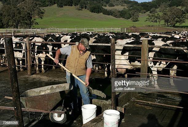 Dairy farmer Jim McIsaac Jr works on the McIsaac Dairy November 30 2006 in Novato California Dairy farmers across the country are struggling in the...