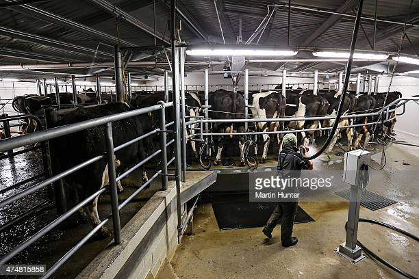 Dairy farmer Leon Doherty hoses out the area after milking cows at night at Synlait dairy farm on May 25 2015 in Christchurch New Zealand New...